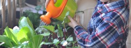 DIY building a vegetable garden with your kids